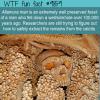 Altamura man fossil
