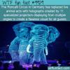Fun Fact – Holographic Circus