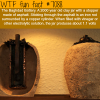 2000 year old batter the baghdad battery wtf