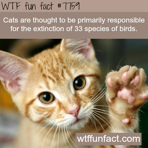 33 species of bird species are extinct because of cats - WTF fun fact
