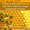 8 bees make a spoon of honey in their life time
