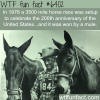 a 3500 mile horse race was won by a mule wtf fun