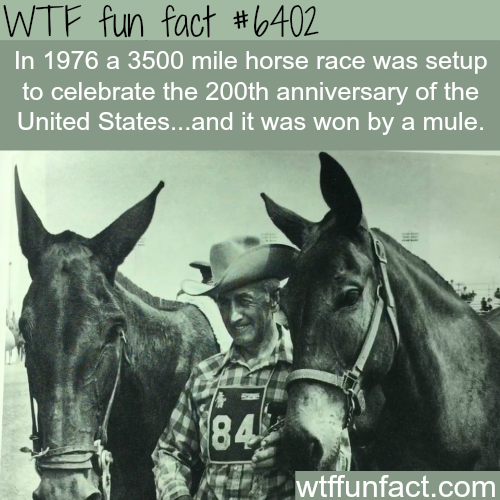 A 3500 mile horse race was won by a mule - WTF fun facts