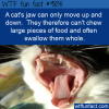 a cats jaw can only move up and down they