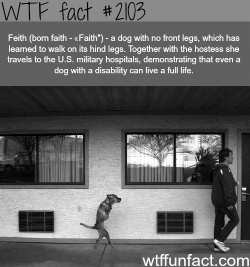 A dog with no frong legs -WTF fun facts
