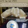 a fisherman found a pearl worth 100 million