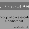 a group of owls is called