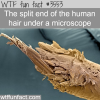 a human hair under microscope