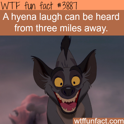 A hyena laugh - WTF fun facts