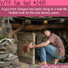 a man lives in a real life hobbit hole wtf fun facts