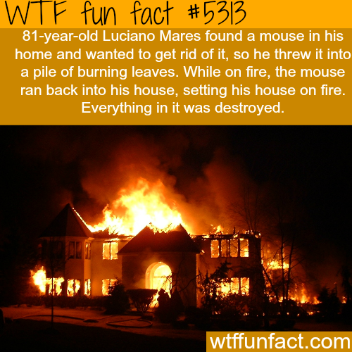 A mouse burns down a house of the man that tried to kill him - WTF fun facts