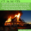 a mouse sets fire into a home wtf fun facts