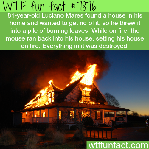 A mouse sets fire into a home - WTF fun facts