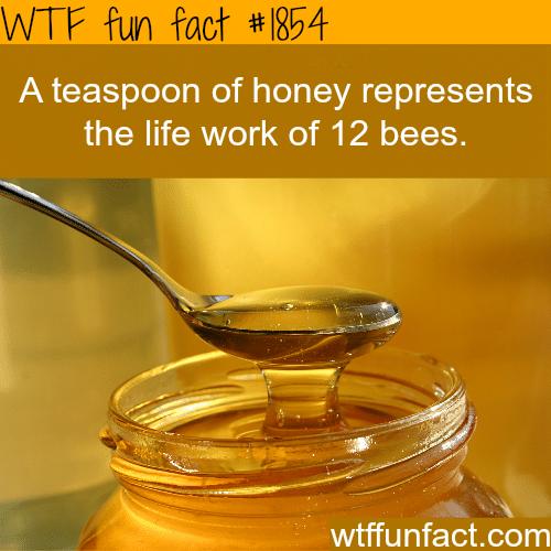 A teaspoon of honey -WTF fun facts