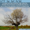 a tree growing on top of a tree wtf fun fact