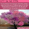 a tree with over 40 fruits