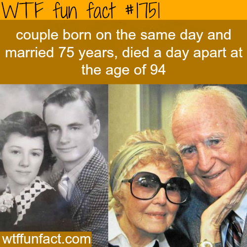 A true love story -WTF fun facts