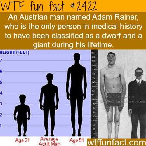 Adam Rainer