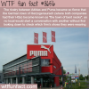 adidas vs puma wtf fun facts