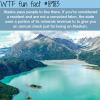 alaska will pay you money to live there wtf fun