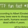 albert einstein theory honey bees