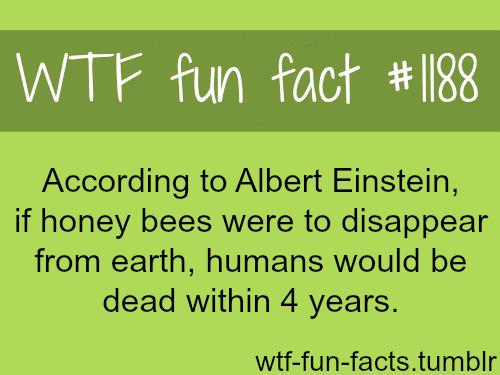 Albert Einstein theory - honey bees