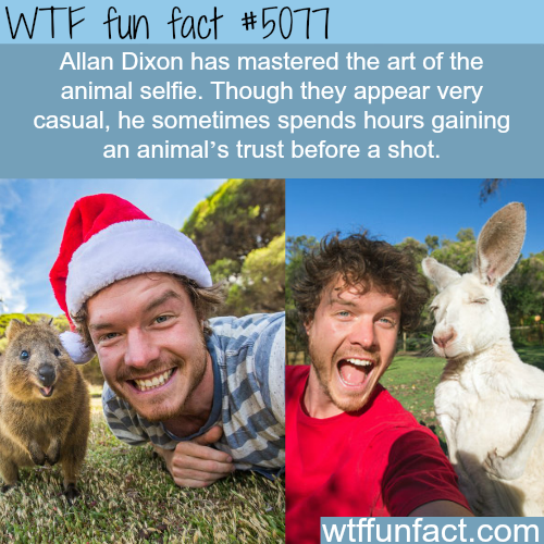 Allan Dixon and the art of animal selfie - WTF fun facts
