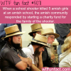 amish community starts a fund for a school shooter