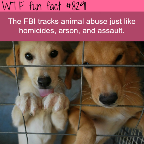 Animal abuse is tracked by the FBI - WTF fun facts