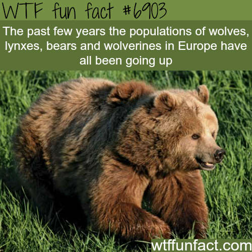 Animal population is on the rise in Europe - WTF fun fact
