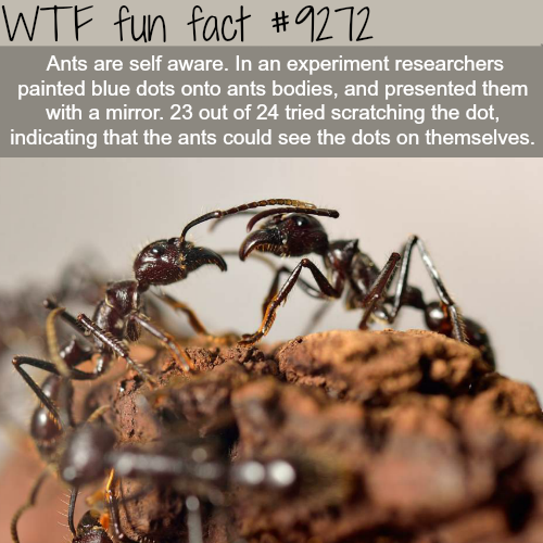 Ants are self-aware - WTF fun fact