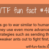 ants army facts