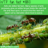 ants wtf fun facts