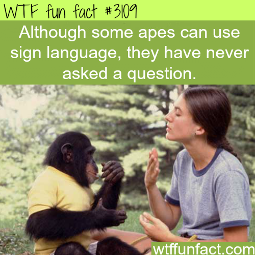 Apes using sign language -WTF fun facts