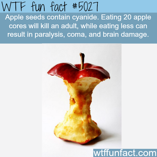 Apple seeds are harmful and could kill you - WTF fun facts