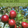 apples wtf fun facts