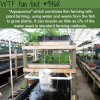 aquaponics wtf fun fact