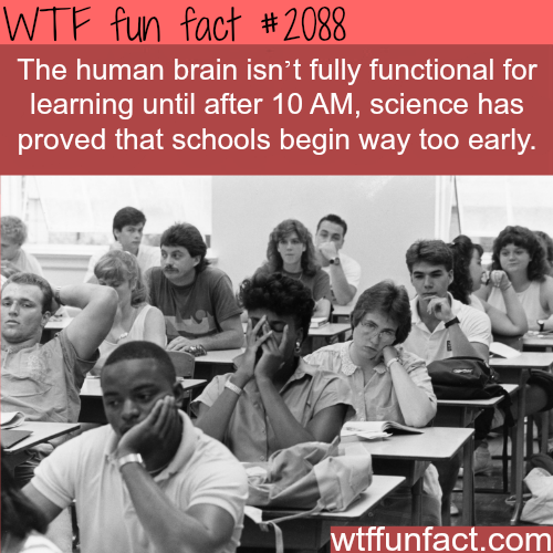 Are morning classes good for you? -WTF fun facts
