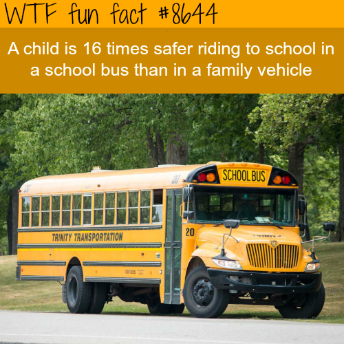 Are school buses safer than afamily vehicle - WTF fun facts