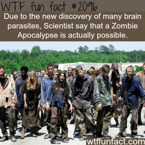 Are Zombie Apocalypse possible -WTF fun facts