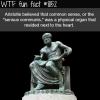 aristotle wtf fun fact