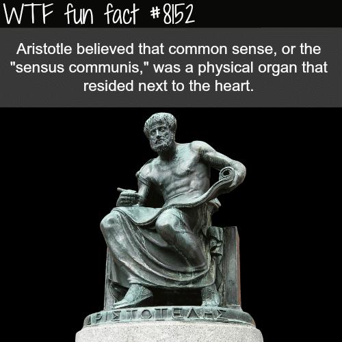 Aristotle - WTF fun fact