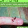 army ants natural sutures