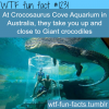 at crocosaurus cove aquarium in australia they take you