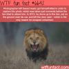 atif saeed photography wtf fun facts