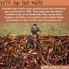 australias gun laws wtf fun facts
