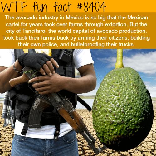 Avocado cartels - WTF fun facts