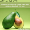 avocados are poisonous to your pet wtf fun facts