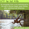 awesome animals fact
