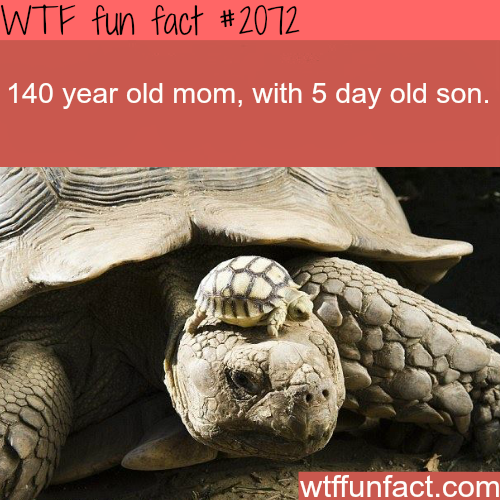 Awesome animals photography  - WTF fun facts